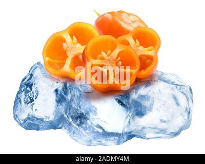 Pile of halved orange Habanero hot chile peppers freezing on roughly crushed ice, isolated - Stock Photo