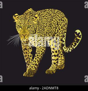 Walking leopard graphic design isolated on black background. Animal hand drawn illustration. - Vector - Stock Photo
