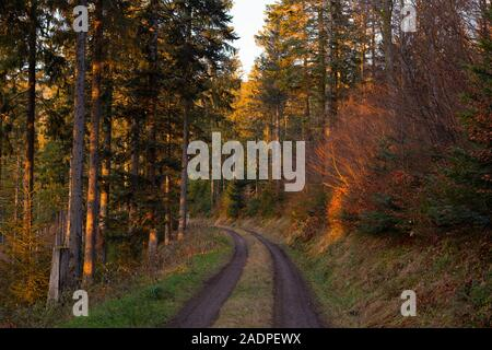 Road inside the forest. Beautiful scenic, romantic landscape with golden light. Trees on path in wild wood. Autumn. Schwarzwald, Black Forest. Germany - Stock Photo