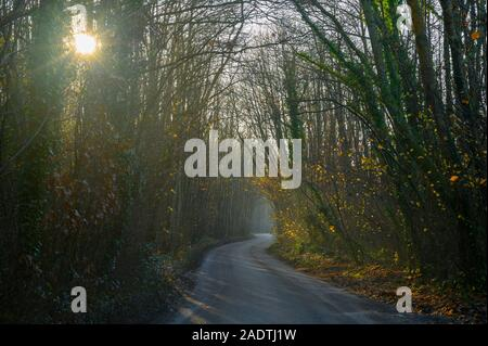 Morning sun filters through trees and a narrow country lane winds through  the woods - Stock Photo