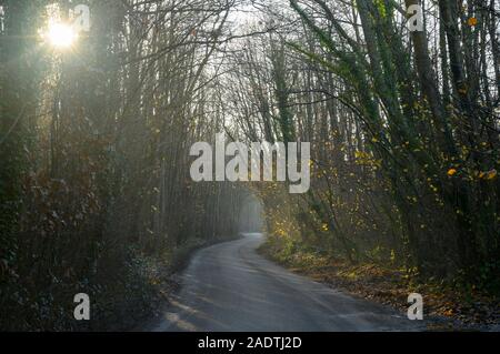 Morning sun filters through trees and a narrow country lane winds through  the woods