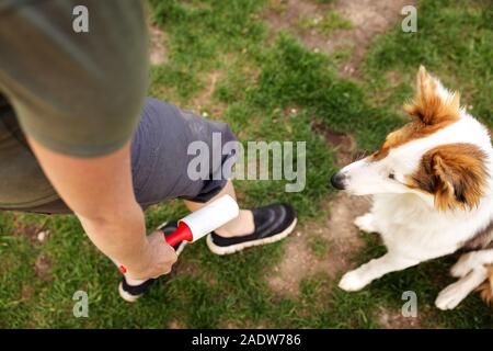 adult woman is using a lint roller to remove the hairs from her cute puppy dog from her trousers - Stock Photo