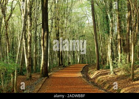Running track in nature on autumn season. Dry leaves on the ground and red pebble road for running and jogging. Belgrad Forest in Istanbul, Turkey. - Stock Photo