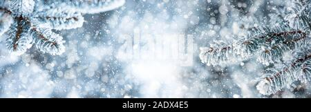 Pine tree branches covered frost in snowy atmosphere. Winter panoramic banner with snowy pine branches - Stock Photo