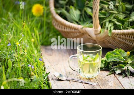 Tea from nettle. Fresh spring nettle. Suitable for salad, tea or use in cosmetics. - Stock Photo
