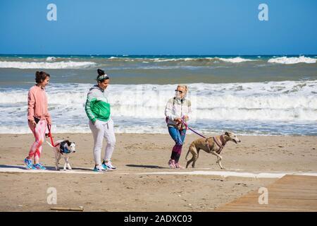 Three women walking their dogs, Greyhounds on beach, Fuengirola, Costa del sol, Spain.. - Stock Photo