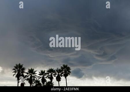 Mammatus thunderstorm clouds above a cluster of palm trees in Venice Beach, Los Angeles, California, USA - Stock Photo
