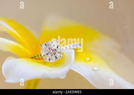 Beautiful Diamond Ring Resting On White Yellow Plumeria Flower - Stock Photo