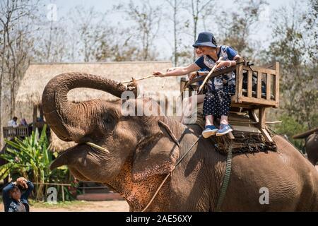 Tourists riding on elephants, Luang Prabang Elephants Camp, Luang Prabang, Laos, Asia. - Stock Photo