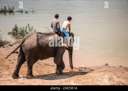 Tourists have bath with elephant, Luang Prabang Elephants Camp, Luang Prabang, Laos, Asia. - Stock Photo