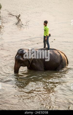 Bath with elephants, Luang Prabang Elephants Camp, Luang Prabang, Laos, Asia. - Stock Photo