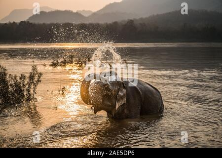 Luang Prabang Elephants Camp, Luang Prabang, Laos, Asia. - Stock Photo