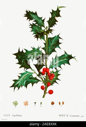 vintage natural history illustration - Stock Photo