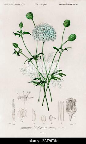 vintage natural history illustration - Stock Photo