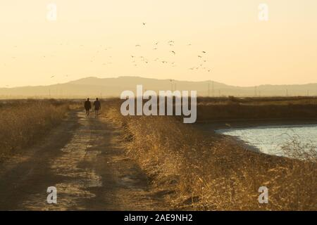 Couple walking away from photographer on dirt trail next to San Fransisco Bay, at dusk as the sun sets behind the mountains and birds fly over head. - Stock Photo
