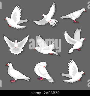Pigeon or white dove bird in motion on grey background - Stock Photo