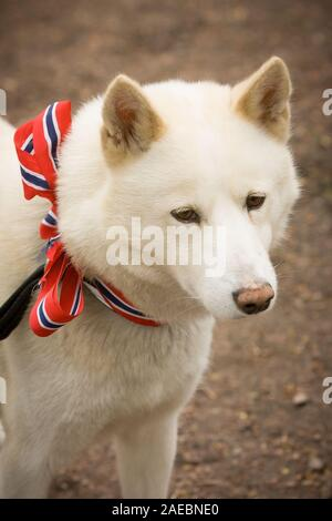 Oslo, Norway - May 17, 2010: National day in Norway. Norwegian dog at traditional celebration and parade on Karl Johans Gate street. - Stock Photo