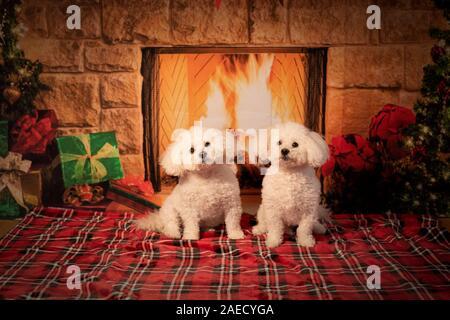 Happy holidays - Stock Photo