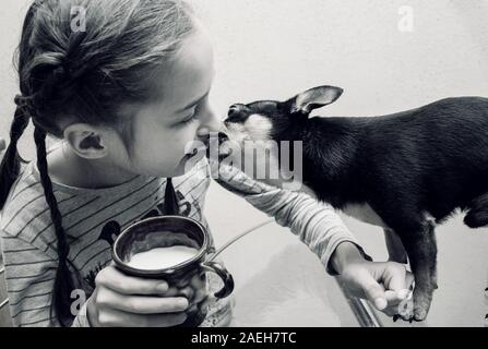 Her chihuahua dog poses near. Girl and chihuahua at the table. Girl 9 years old and her pet in the kitchen. The dog is sitting on a glass table. Baby - Stock Photo