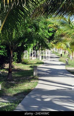 The tree lined bike path in Tulum, Mexico - Stock Photo