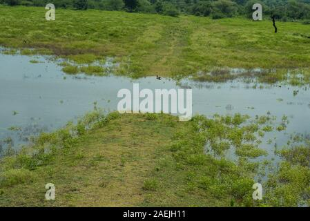 nature purity grass on the river bank - Stock Photo