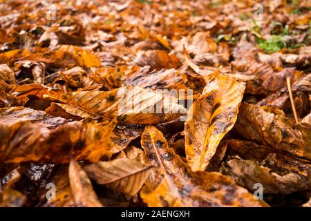 background of autumn leaves covering the ground - Stock Photo