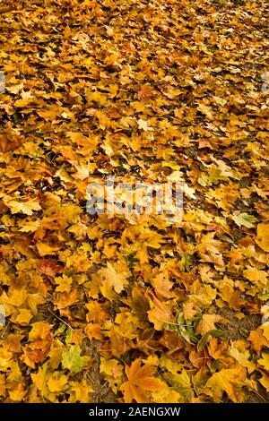 background of autumn leaves covering the ground