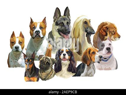 Colorful vector realistic illustration of large and small dog breeds portraits: German Shepherd, Pitbull, Pug, Spaniel, Beagle, Afghan Hound isolated - Stock Photo
