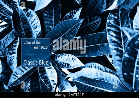 Color of the Year 2020 Classic Blue Pantone. Beautiful elongated large tropical leaves intertwined. Contrast background. Black and white tinted photo. - Stock Photo
