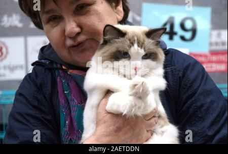 A pedigree cat is measured by a referee to see how pureblood it is at LCA Cat Exhibition in Shenyang city, northeast China's Liaoning province, 3 Nove - Stock Photo