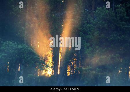 Sunny morning in the misty autumn forest, the sun's rays make their way through the trees beautifully - Stock Photo