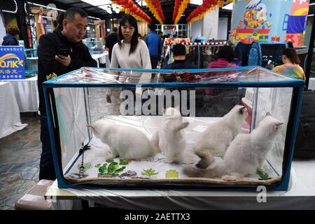 A pedigree cat which participates into LCA Cat Exhibition is shown in Shenyang city, northeast China's Liaoning province, 3 November 2019. *** Local C - Stock Photo