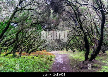 In the Garajonay National Park on the Canary Island of La Gomera - Stock Photo