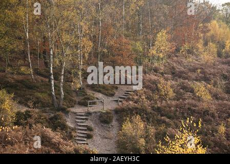 Paths and steps through public heathland and nature reserve with silver birch trees and dead bracken in warm autumn colour, Snelsmore Common, Newbury, - Stock Photo