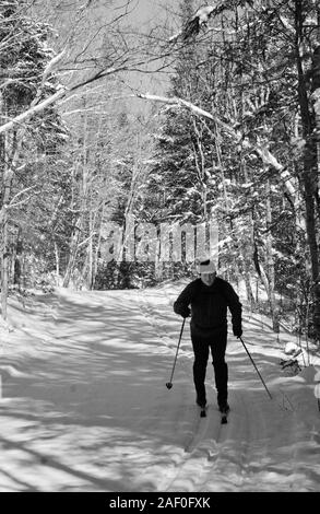 A retired man skiing on a snow covered trail through the forest in Algonquin Park - Stock Photo