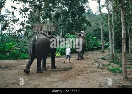 Tourist group rides through the jungle on the backs of elephants. Laos. Luang Prabang - Stock Photo