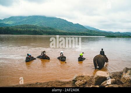 Laos. Luang Prabang - 15 January 2019: Elephant drivers wash, bathe their animals in the Mekong river standing on an elephant. - Stock Photo