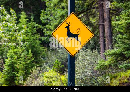 Deer regularly cross this road, be alert for animals sign. Warning road signs, selective focus and close up view with forest trees background - Stock Photo