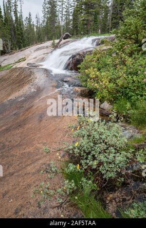 Cinquefoil and Spiraea growing next to a stream in Idaho's Sawtooth Mountains. - Stock Photo