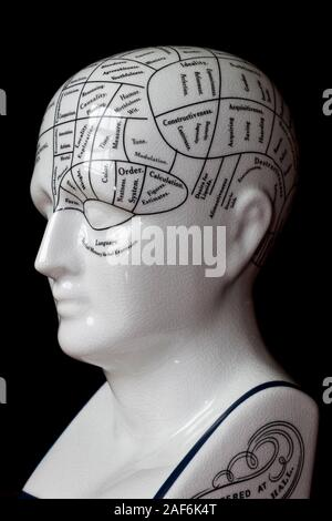 Vintage porcelain phrenology head showing the brain map used in psychology education. - Stock Photo