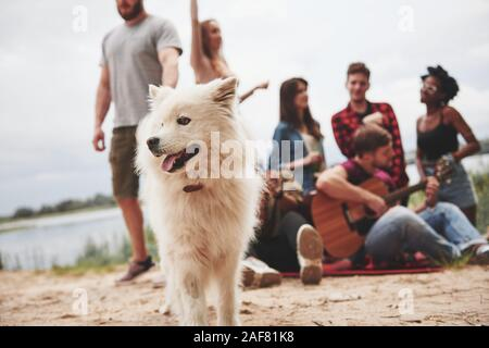 Portrait of white dog. Group of people have picnic on the beach at background. Friends have fun at weekend time - Stock Photo