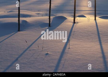 Four tall wooden poles in winter landscape.  During summer season the poles are used as plant support for hops. - Stock Photo