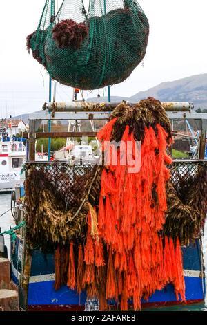 Unloading red algae, fishing harbor of Saint-Jean de Luz, Pyrénées-Atlantiques, France