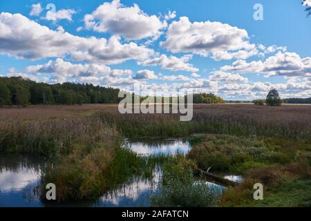 Narew River oxbow in fall with debris of old bridge in foreground and reed wide open under cloudy sky, Belarus, Europe - Stock Photo
