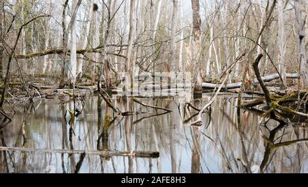 A fairy tale pond in the nature reserve - Stock Photo