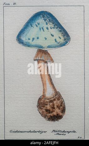 Original mushroom print.This print has the original frame.It is marked 'Tom IV' on the top and 'Pavillon' on the bottom. The mushroom is in color and - Stock Photo