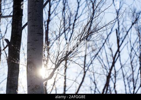 The sun rays behind the tree in winter in Zagreb, Croatia - Stock Photo