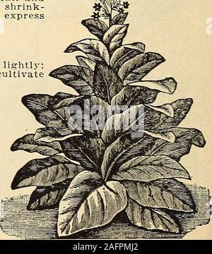 . Currie's farm and garden annual : spring 1916. LIST OF CHOICE FARM SEEDS FOR 1916. 41 1 - Stock Photo