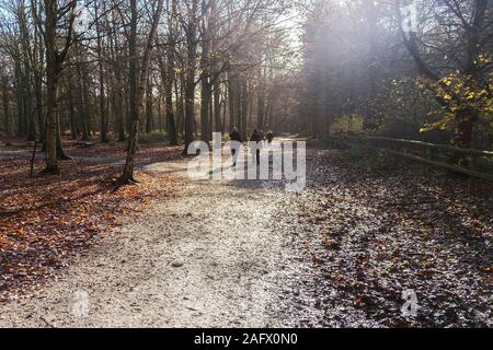 Familes enjoying a walk in the early morning autumnal sunshine at Thorndon Park North in Brentwood in Essex. - Stock Photo