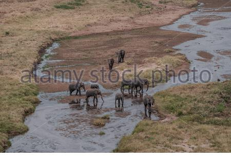 A group of African bush elephants (Loxodonta africana) at a waterhole in Tarangire National Park, near Arusha, Tanzania / spotted from above on Safari - Stock Photo